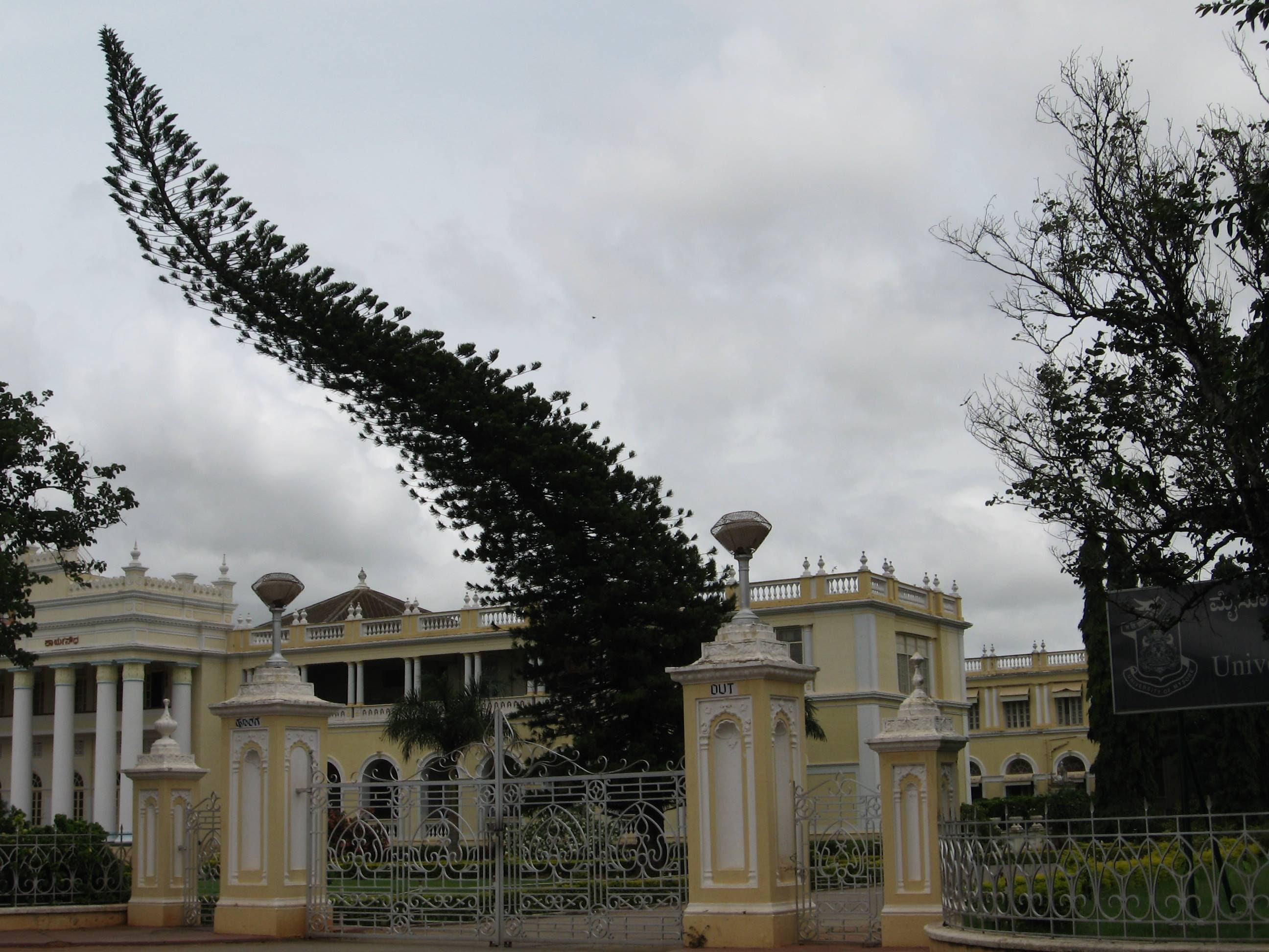 tree bent mysore