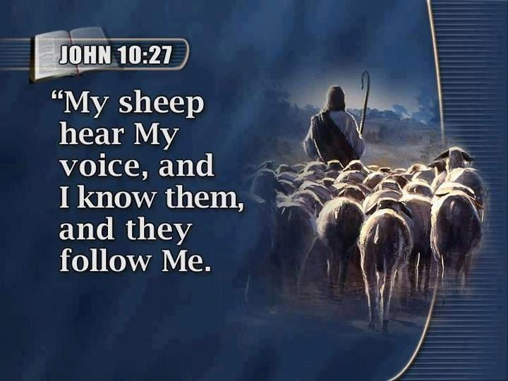 Can you hear your GOOD SHEPHERD - Jesus's sheep know his voice