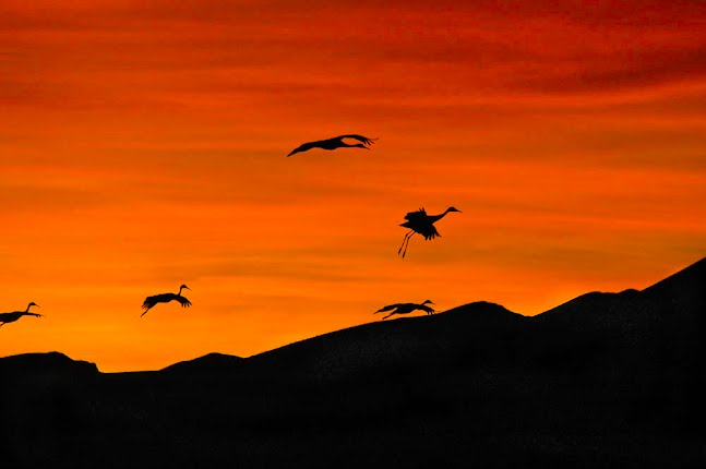 Cranes at Sunrise