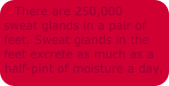 250,000 sweat glands in human body