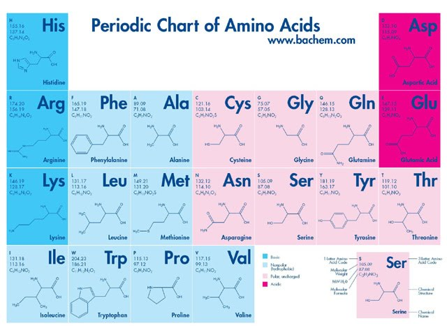 Periodic Chart of Amino Acids