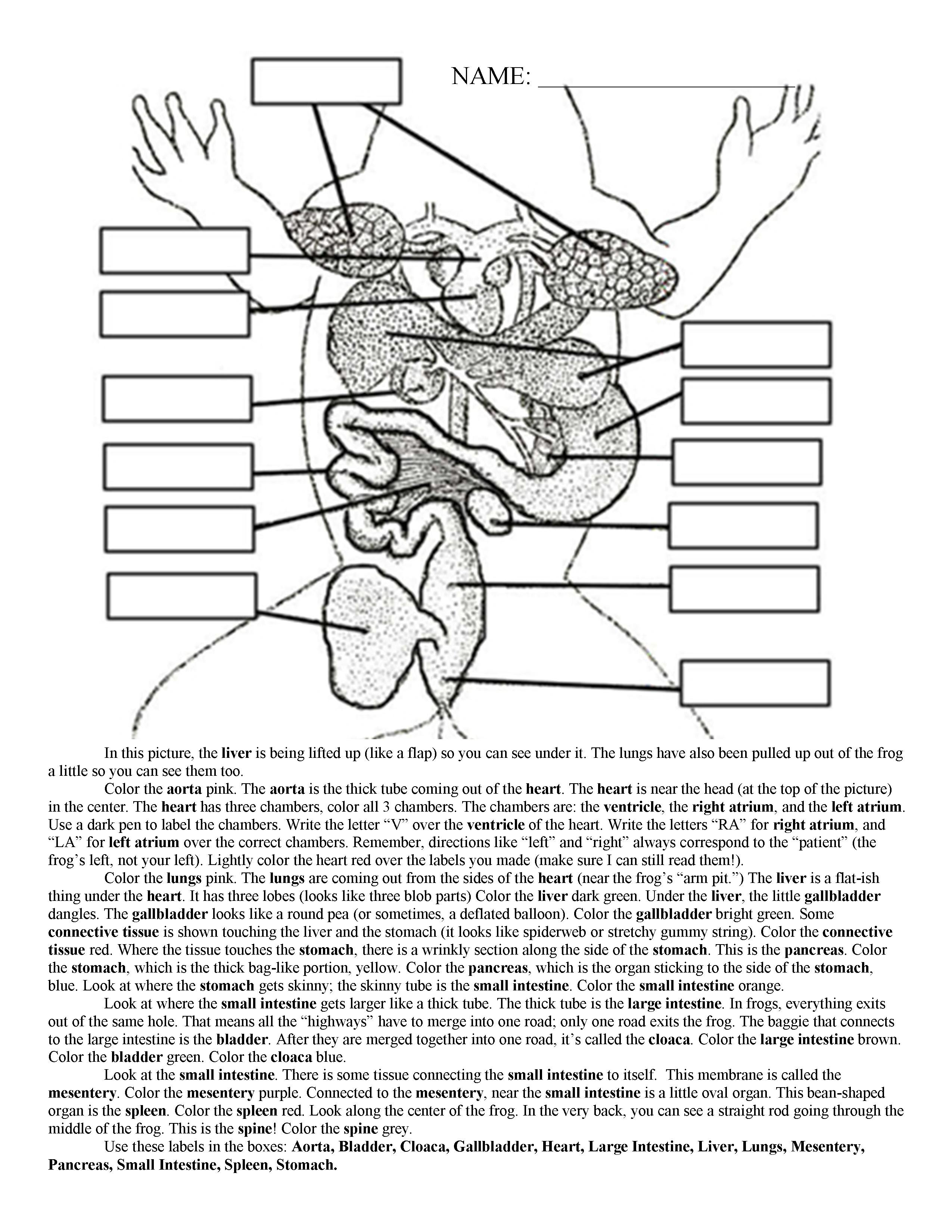 Cut Out Frog Dissection Internal Anatomy Diagram - DIY Wiring Diagrams •