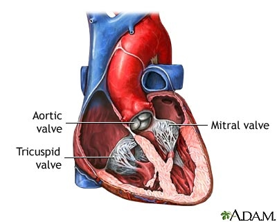 Aortic Valve Physiology Bme 365r Aortic Stenosis