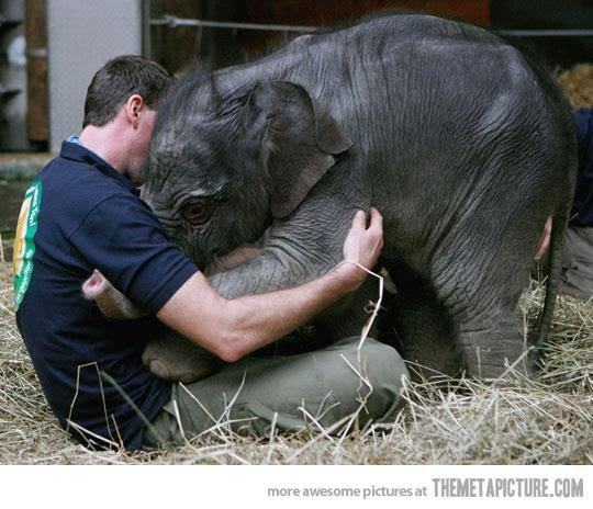 """MM%20Photo%20from%20Facebook%27s%20page%20Animal%20Liberation%20Unite%2010 - """"Don't ever leave me!"""" - Photos Unlimited"""