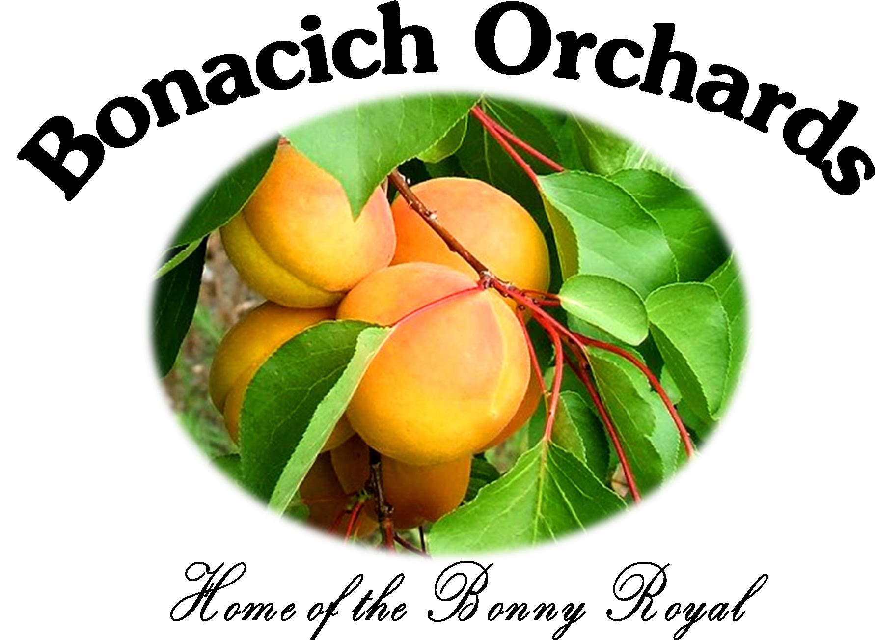Bonacich Orchards