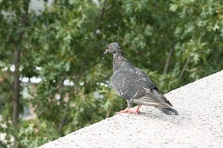 bird repellent and barrier systems services alexandria va