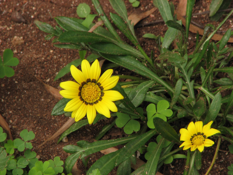Butterfliesandflowerspecies