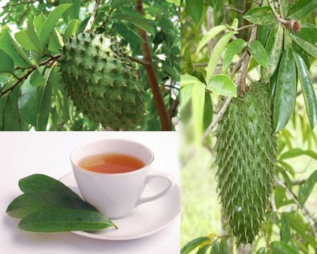Cancer Cured Easily With Sour Sop
