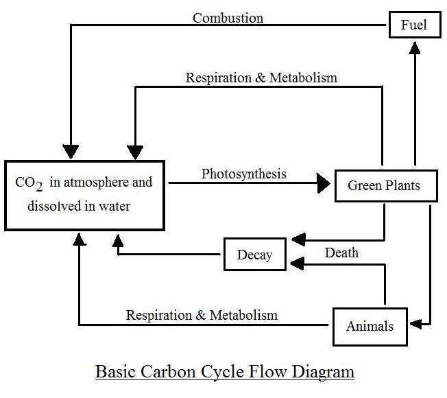 Diagrams carbonoxygen cycle comments ccuart Choice Image