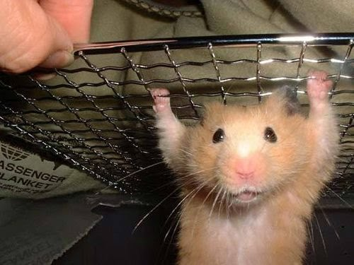 Websites We Found Obtaining And Caring For A Class Hamster