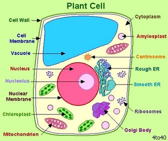 Plant Cells - cells in' stuff