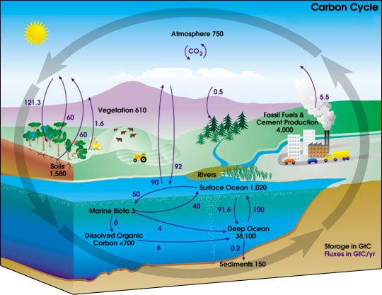 Carbon and Oxygen cycle - Sahara Desert