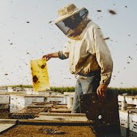 Colony the movie beekeeper tending bee hive