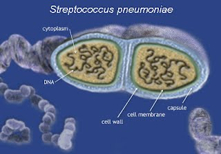 what is the treatment for streptococcus pneumoniae