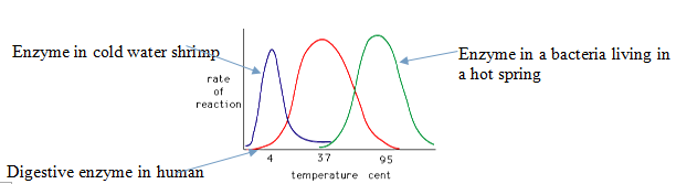 effect of ph and temperature enzyme catalase reaction rate The rate of reaction will probably have doubled for that increase in temperature - in other words, an increase of about 100% the effect of increasing collision frequency on the rate of the reaction is very minor.