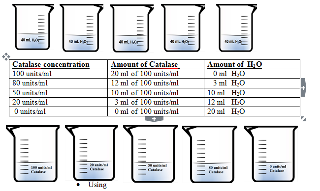 effect of enzyme concentration on catalase activity