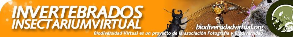 http://www.biodiversidadvirtual.org/insectarium/
