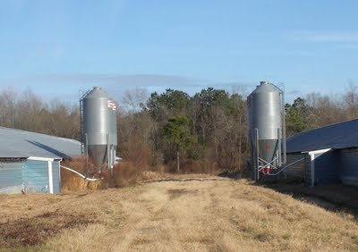 14 Ton Feed Bins - Commercial Poultry Farm