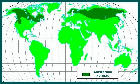 Coniferous forest biomes