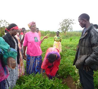 A farmer group in Kisiha visits a sweet potato demo plot