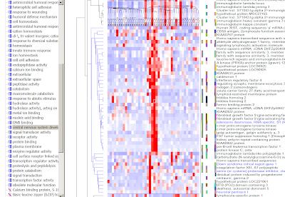 Nef gene functional study