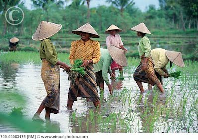 how to make a rice paddy hat