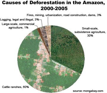 causes of deforestation in the amazon