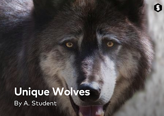 Unique Wolves story on Storehouse app