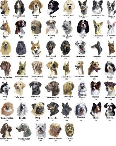 Dating sites for different races of dogs
