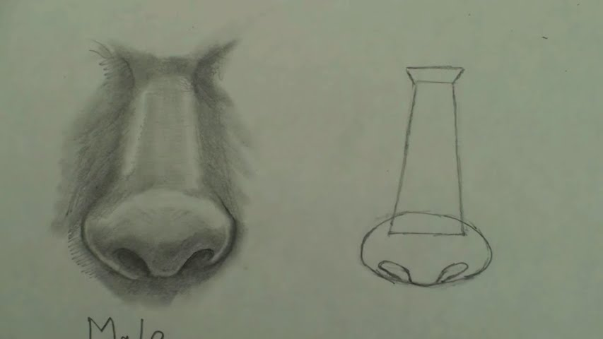 draw female nose 1 step by step