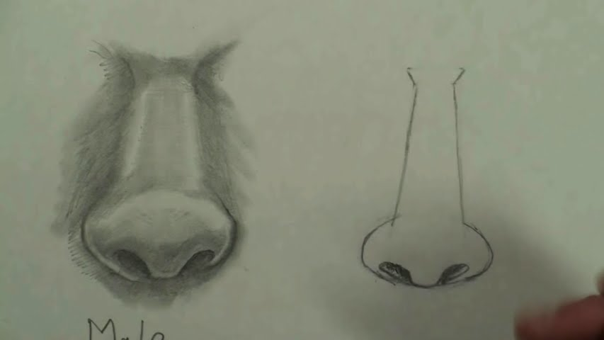 draw female nose step by step 2