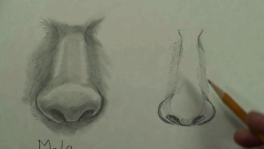 draw female nose step by step 5