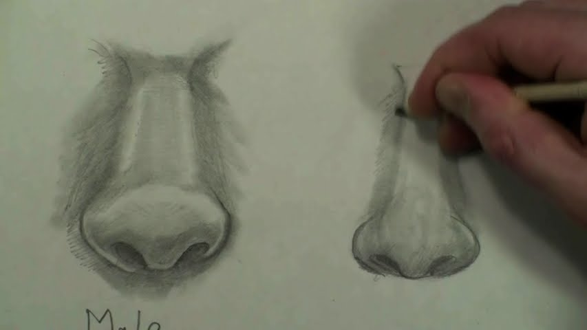 draw female nose step by step 6