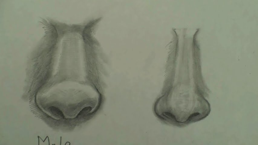 draw female nose 7 step by step