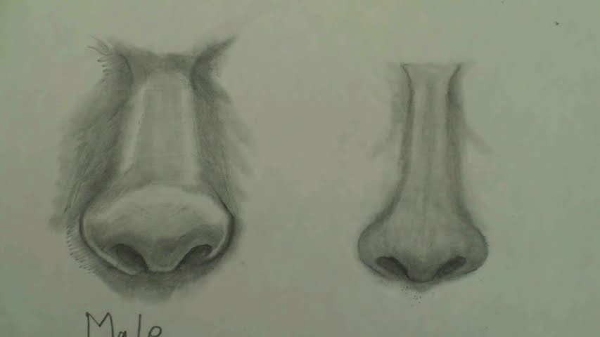 draw female nose step by step 8