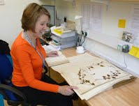 At work in the Yorkshire Museum herbarium