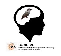 COMSTAR project logo
