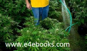 How To Grow Weed Free Ebook Download
