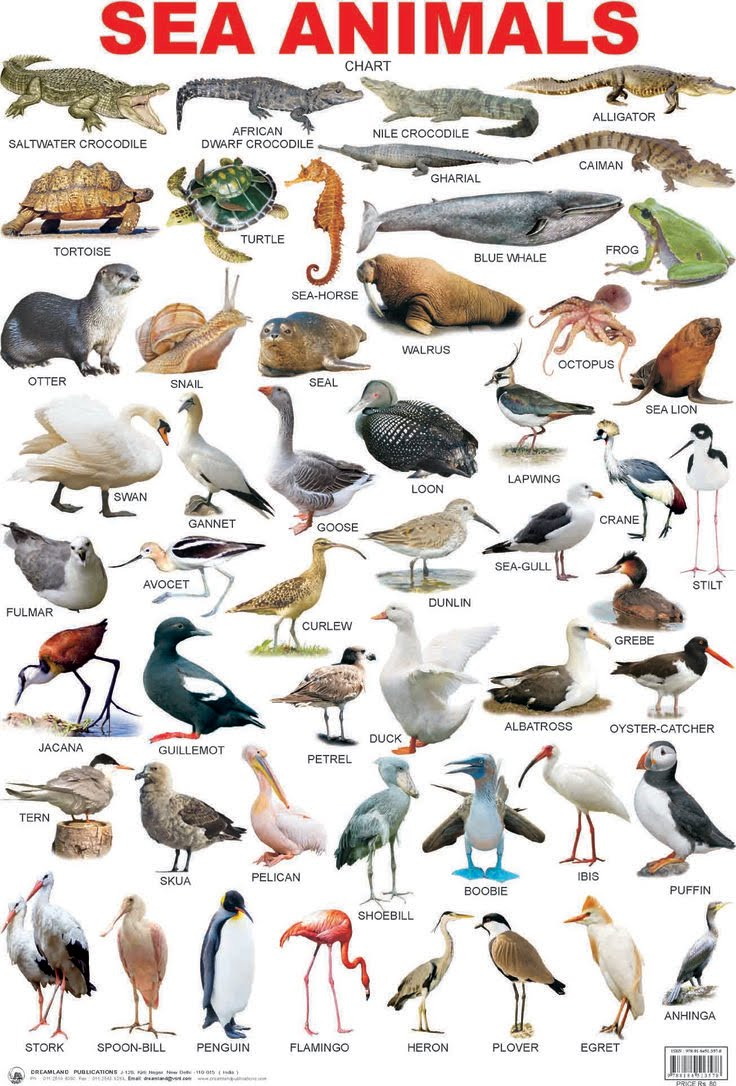 Animals Names الحيوانات The Abc