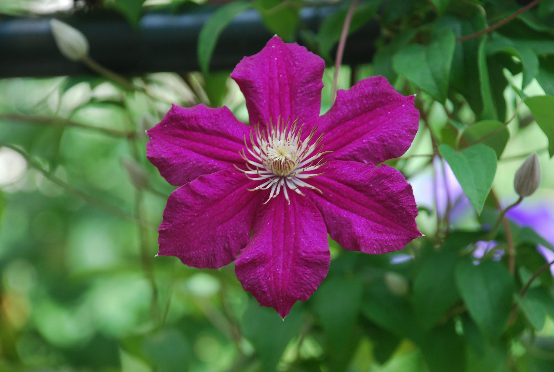 Fleurs echalierbruno for Site de fleurs