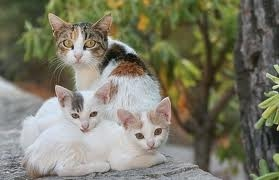 chatte chatons adopter