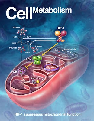 Chapter 4: Cellular Metabolism - EHS Anatomy & Physiology (A)