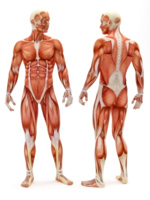 Chapter 1: Introduction - EHS Anatomy & Physiology (A)