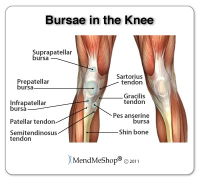 3 synovial joints ehs anatomy physiology a have an inner lining of synovial membrane the purpose of the bursae is to aid and cushion the movement of tendons over bony parts or other tendons ccuart Choice Image
