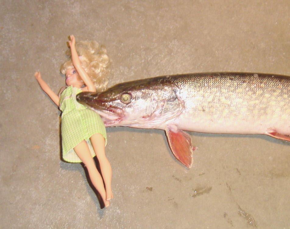 Sonsobarbie va de pesca