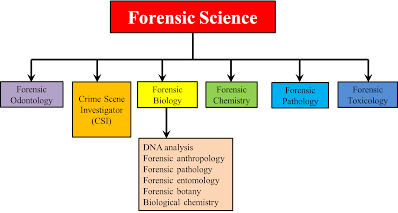 Forensicchemproject