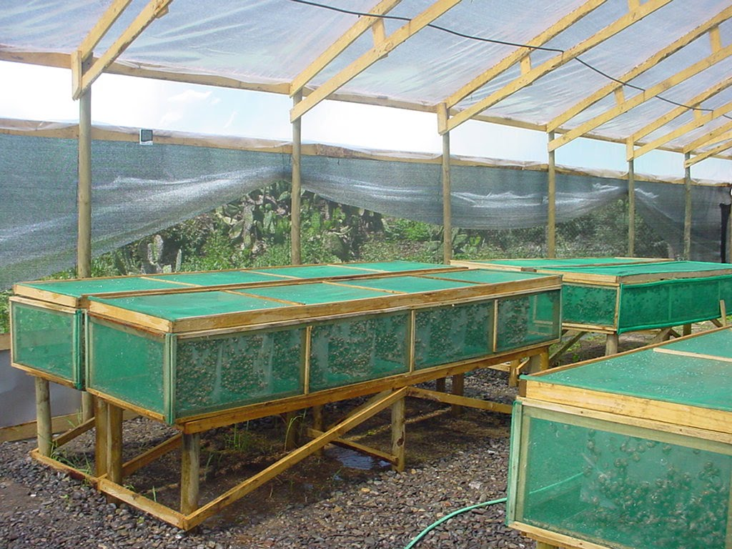 Jaulas escargotkaiser Lagunas para cachamas