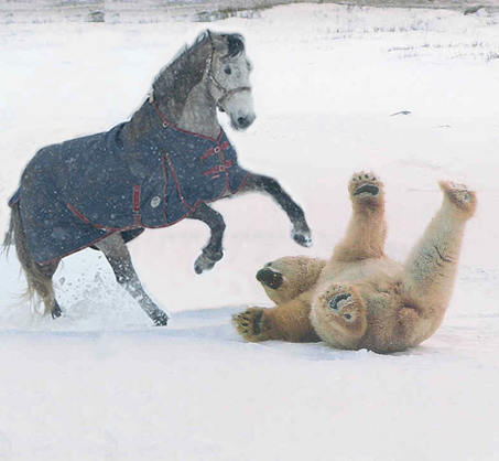 A horse knocking over a bear