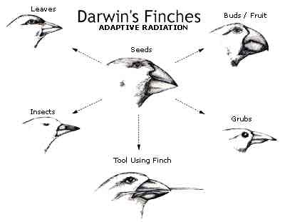 Darwin S Theory Of Natural Selection Result