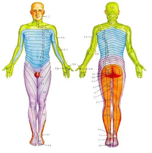 Signs and symptoms spinal cord injury at l1 below is a diagram of the dermatomes within the human body from the top of the purple region to the rest of the lower extremity is the affected area ccuart Gallery